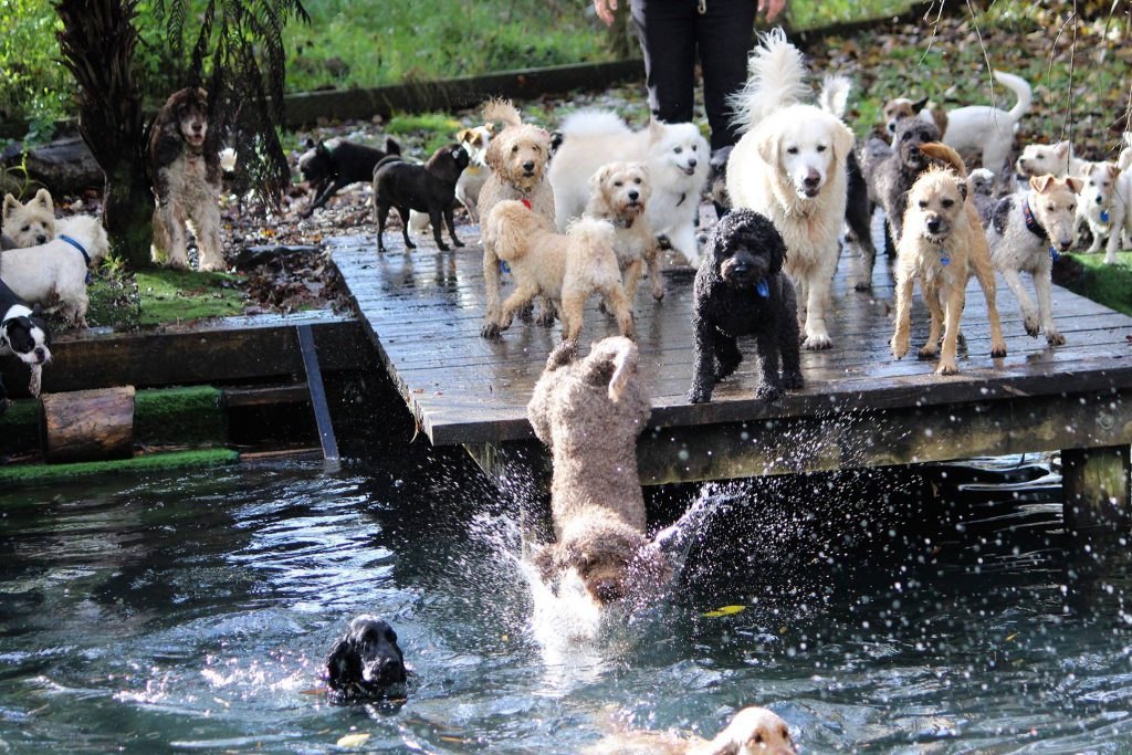 Bethells Farmstay For Dogs waterhole with dogs jumping in